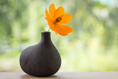 Flor bonita Imagens de Stock