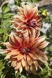 Flor bonita Fotos de Stock Royalty Free
