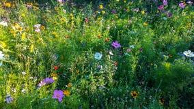 A flor bonita coloriu campos fotografia de stock royalty free