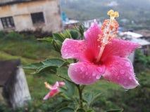Flor bonita com gotas da chuva Imagem de Stock Royalty Free