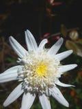 Flor bonita com um fundo escuro imagens de stock royalty free