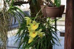 Flor bonita da flor da orquídea Imagens de Stock