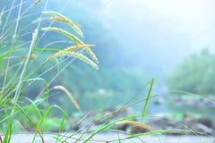 Flor bonita da grama no fundo verde do jardim Imagens de Stock Royalty Free