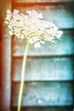 Flor bonita da mola fotos de stock
