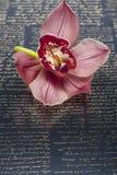 Flor bonita da orquídea Foto de Stock Royalty Free