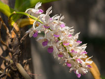 Flor bonita da orquídea Fotos de Stock