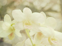 Flor bonita da orquídea com filtros de cor Imagens de Stock Royalty Free