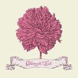Flor bonita desenhada mão Imagem de Stock