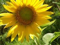 Flor bonita do jaspe Foto de Stock