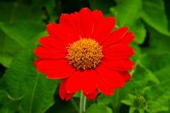 Flor bonita do sol fotografia de stock