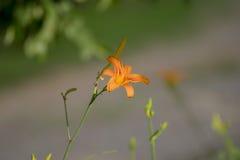Flor bonita do tempo de mola Fotografia de Stock