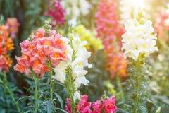 Flor bonita e fundo verde da folha no jardim Fotografia de Stock Royalty Free