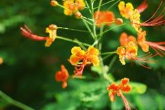 Flor bonita e luz do sol amarelas e alaranjadas Imagens de Stock Royalty Free
