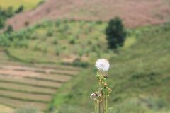 Flor bonita e paisagem do fundo da montanha Imagens de Stock