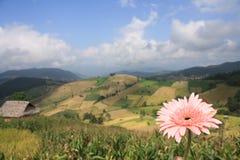 Flor bonita e paisagem do fundo da montanha Fotos de Stock Royalty Free