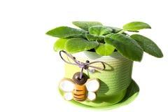 Flor bonita em um vaso Imagem de Stock