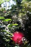 Flor bonita em uma árvore Foto de Stock Royalty Free