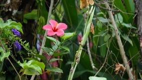 Flor bonita em uma cidade Fotos de Stock