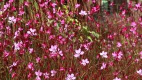 Flor bonita Flora Flowers na mãe Natureza