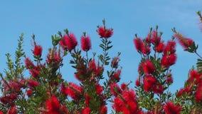 Flor bonita Flora Flowers na mãe Natureza vídeos de arquivo