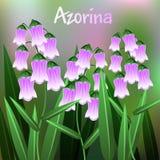 Flor bonita, ilustração da flor de Azorina com as folhas do verde no ramo de árvore Vetor Fotografia de Stock Royalty Free