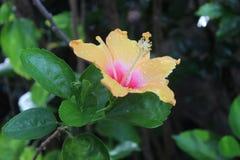 Flor bonita no jardim foto de stock