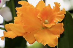 Flor bonita no jardim fotografia de stock