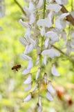 Flor bonita no jardim Fotos de Stock Royalty Free