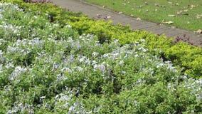 Flor bonita no jardim com flor na mola, beleza do campo floral com dia de verão video estoque