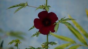 Flor bonita no jardim de uma casa Foto de Stock Royalty Free