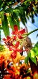 Flor bonita pequena foto de stock royalty free
