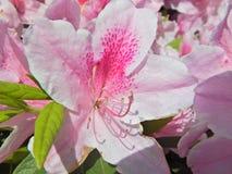 Flor bonita por suas cores Foto de Stock