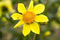 Flor bonita que floresce no dia de mola, pela lente macro imagens de stock royalty free