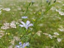 Flor bonito Fotos de Stock Royalty Free