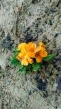 Flor bonito amarela fotografia de stock
