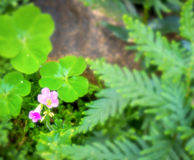 Flor bonito da cor cor-de-rosa vibrante no berçário Fotos de Stock