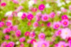 Flor borrada sumário Imagem de Stock Royalty Free