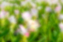 Flor borrada sumário Foto de Stock