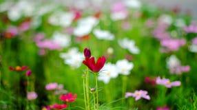 Flor borrosa del fondo natural en el jardín fotografía de archivo libre de regalías