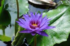 Flor  Botanical Garden Royalty Free Stock Photography