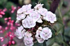 Flor branca Imagem de Stock