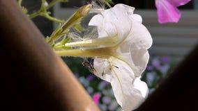 Flor branca vídeos de arquivo