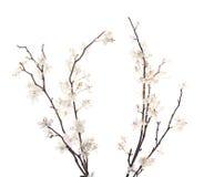 Flor branca artificial de sakura isolada Fotos de Stock Royalty Free
