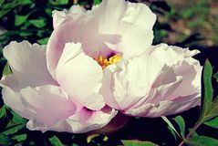 Flor branca bonita imagem de stock royalty free