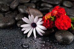 Flor branca bonita com as pedras no fundo escuro Imagem de Stock