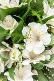 Flor branca bonita do hibiscus, ramalhete festivo Foto de Stock