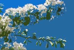 Flor branca da ?rvore de Apple foto de stock royalty free
