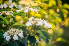 Flor branca de florescência Foto de Stock