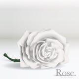 Flor branca de Rosa do vetor no fundo Foto de Stock Royalty Free