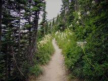 Flor branca de tenax do Xerophyllum de Beargrass na fuga de Highline em Logan Pass em ir à estrada de Sun no parque nacional U de foto de stock